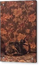 Camo Cat Acrylic Print