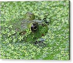 Camo Frog Acrylic Print