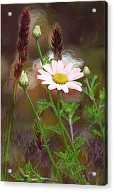 Camomile And Grass Acrylic Print by Joe Halinar