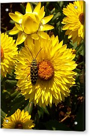 Camouflage Acrylic Print by Bill Werle
