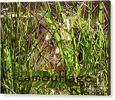 Camouflage Acrylic Print by Methune Hively