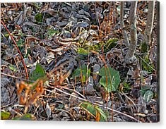 Camouflaged Plumage With Fallen Leaves Acrylic Print