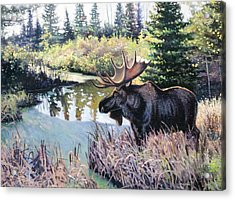 Camp 20 Creek Moose Acrylic Print by Larry Seiler