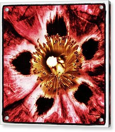 Acrylic Print featuring the photograph Can You Guess What Flower? Hints: It's by Mr Photojimsf