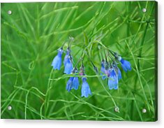 Can You Hear The Blue Bells Acrylic Print by Bj Hodges