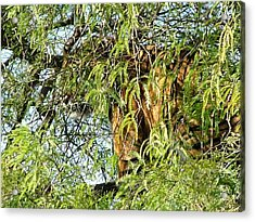 Can You See Me........ Acrylic Print by Nick Gustafson