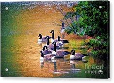 Acrylic Print featuring the photograph Canada Geese - Autumn At Pandapas Pond by Kerri Farley