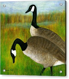 Canada Geese Grazing  Acrylic Print