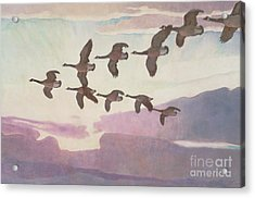 Canada Geese In Spring Acrylic Print by Newell Convers Wyeth