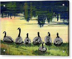Canada Geese Acrylic Print by Synnove Pettersen