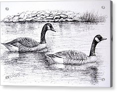 Canada Geese Acrylic Print by Terence John Cleary