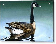 Canada Goose II Acrylic Print