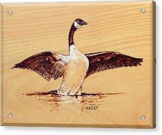 Acrylic Print featuring the pyrography Canada Goose by Ron Haist