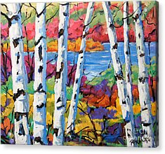Canadian Birches By Prankearts Acrylic Print by Richard T Pranke