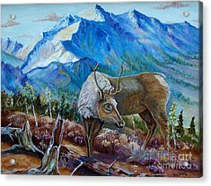 Canadian Caribou Acrylic Print