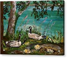 Canadian Geese At Nw Trek Acrylic Print by JR Hawse