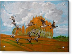 Canadian Geese Acrylic Print by Richard Le Page