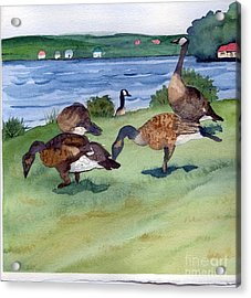 Canadian Geese S  2 Acrylic Print by Gloria Couture