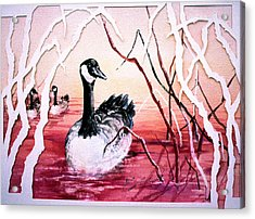 Canadian Geese Sunset Acrylic Print by Connie Williams
