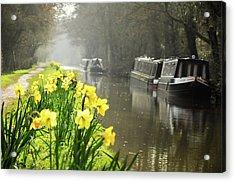 Canalside Daffodils Acrylic Print