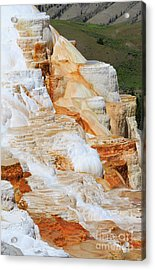Canary Spring Mammoth Hot Springs Upper Terraces Acrylic Print by Louise Heusinkveld