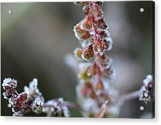 Candied Acrylic Print