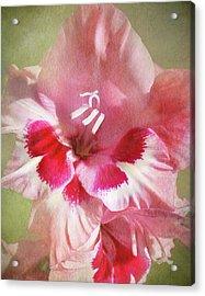 Candy Cane Gladiola Acrylic Print