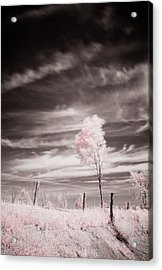 Candy Cotton Dream Acrylic Print by Lea Seguin