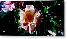 'candy Land' Rose In Abstract Acrylic Print
