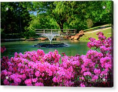 Candy Pink Azaleas At The Azalea Festival Acrylic Print