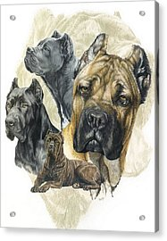 Cane Corso W/ghost Acrylic Print by Barbara Keith