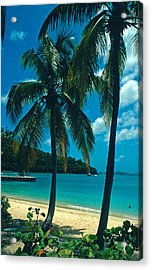 Caneel Bay Palms Acrylic Print by Kathy Yates