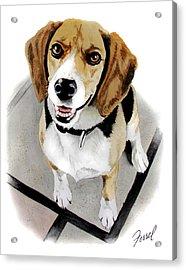Canine Cutie Acrylic Print by Ferrel Cordle