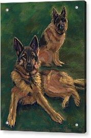 Canine Repose Acrylic Print by Mary Benke