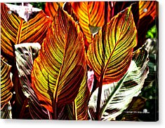 Acrylic Print featuring the photograph Canna 26106hdr by Brian Gryphon