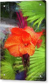 Canna Lily Red Bloom Acrylic Print