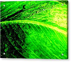 Canna Leaf With Raindrops Acrylic Print by Beth Akerman