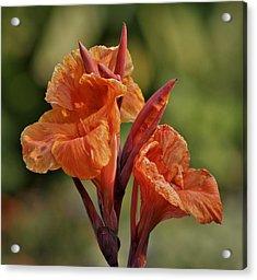 Canna Lily 2945_3 Acrylic Print