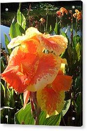 Canna Lily Light Acrylic Print by Warren Thompson