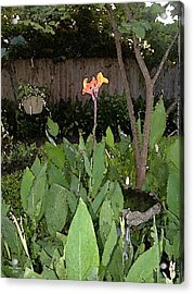Canna With Birdbath Acrylic Print by Fred Jinkins