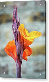 Acrylic Print featuring the photograph Cannas by Terence Davis