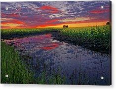 Canola At Dawn Acrylic Print