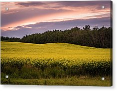 Acrylic Print featuring the photograph Canola Crop Sunset by Darcy Michaelchuk