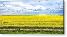 Acrylic Print featuring the photograph Canola Field - Photography by Ann Powell