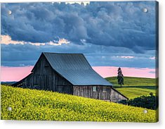 Canola Sunset Acrylic Print by Mark Kiver