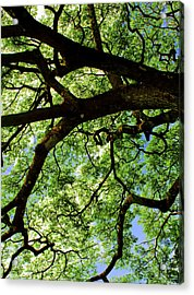 Canopy 1 Acrylic Print