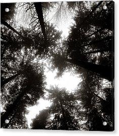 Canopy Acrylic Print by Dave Bowman