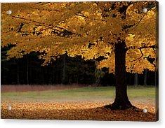 Canopy Of Autumn Gold Acrylic Print