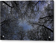 Acrylic Print featuring the photograph Canopy by Votus