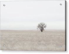 Canpaza Acrylic Print